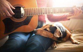 Picture comfort, house, each, people, guitar, dog