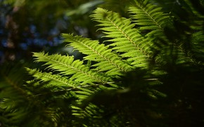 Picture macro, nature, sheet, fern