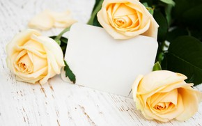 Picture roses, bouquet, yellow, buds, Olena Rudo