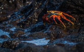 Picture sea, water, light, orange, the dark background, stones, shore, Shine, crab, crab, bokeh, claws