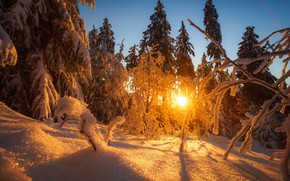 Picture forest, snow, landscape, sunset, nature, beauty