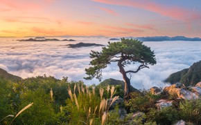 Picture autumn, clouds, landscape, mountains, nature, fog, tree, rocks, morning, grass, pine, South Korea