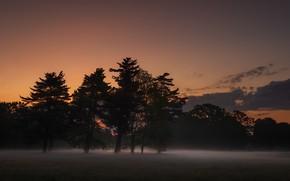 Picture night, nature, fog