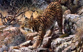Picture look, branches, nature, pose, stones, figure, picture, art, painting, lynx, Carl Brenders