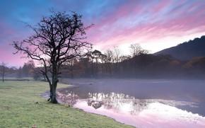 Picture fog, lake, tree