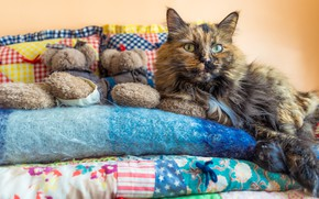 Picture cat, look, pose, comfort, heat, background, room, wall, toys, pillow, blanket, bears, bed, lies, blanket, …