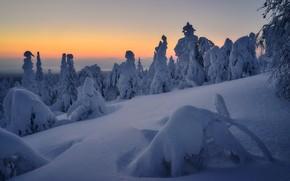 Picture winter, snow, landscape, nature, morning, ate, Сергей Межин