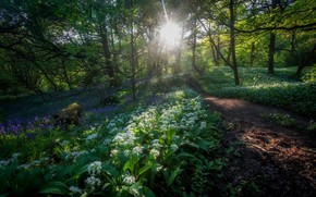Picture greens, forest, morning