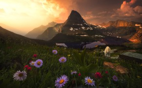 Picture the sky, clouds, landscape, sunset, flowers, mountains, goat, slope, pasture, meadow, goat, goat, grazing