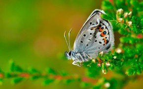 Picture macro, butterfly, Blue