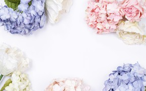 Picture background, Flowers, hydrangea