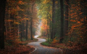 Picture autumn, forest, trees, track, Golden Autumn