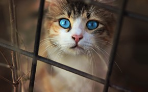 Picture cat, cat, look, the dark background, kitty, mesh, the fence, portrait, rods, kitty, blue eyes
