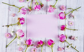 Picture flowers, roses, frame, pink, buds, pink, flowers, beautiful, roses, frame