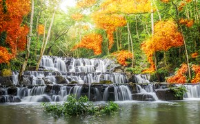 Picture forest, landscape, river, rocks, waterfall, summer, forest, river, landscape, beautiful, autumn, leaves, waterfall