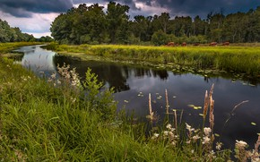 Picture summer, grass, river, shore, cows, pasture, pond, the forest