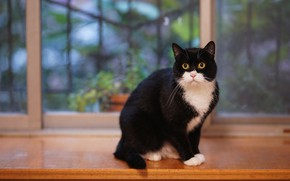 Picture cat, cat, look, background, black and white, black, window, sill, sitting