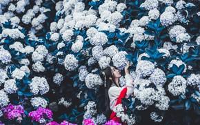 Picture leaves, girl, flowers, the dark background, garden, dress, brunette, hairstyle, beauty, kimono, Asian, white, flowering, …