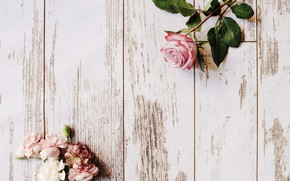 Picture rose, flower, wood, decor, roses, clove