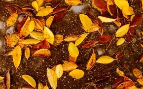 Wallpaper autumn, leaves, colorful, autumn, leaves, autumn