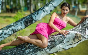 Picture look, girl, pose, tree, trunks, dress, legs, birch, Михаил Бове