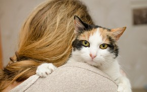 Picture cat, girl, background, hair, muzzle, bokeh