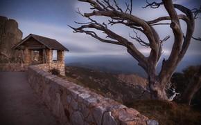 Picture night, tree, australia, Mount Buffalo