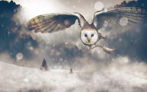 Picture winter, forest, look, snow, flight, nature, rendering, owl, collage, bird, wings, mouse, ate, art, claws, …