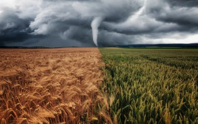 Picture field, nature, ears, Typhoon