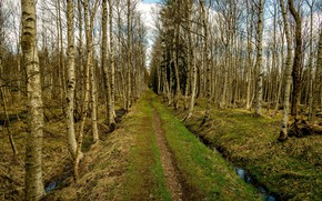 Picture road, forest, nature, spring