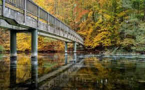 Picture autumn, forest, trees, bridge, Park, river, Germany, Schwentine