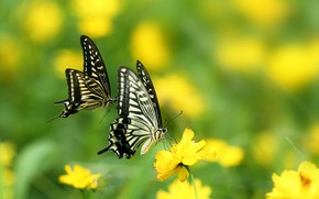 Picture greens, summer, the sun, butterfly, flowers, nature, yellow, bokeh