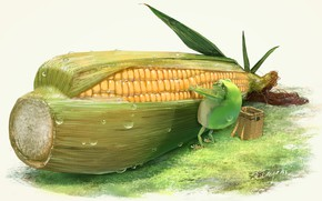Picture frog, corn, the cob