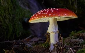 Picture macro, mushroom, mushroom