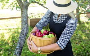 Picture girl, apples, hat