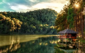 Picture forest, trees, lake, house