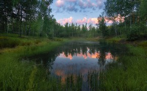 Picture forest, trees, landscape, nature, lake, dawn, morning, Alexey Bagaryakov