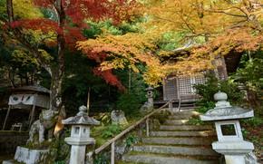 Picture Nature, Autumn, Trees, Japan, Ladder, Temple, Gohodo