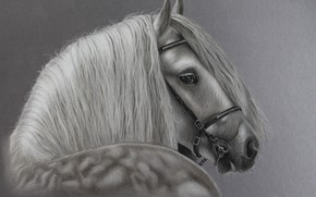 Wallpaper horse, horse, mane