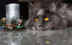 Picture winter, cat, cat, look, face, light, reflection, the dark background, table, grey, holiday, new year, …