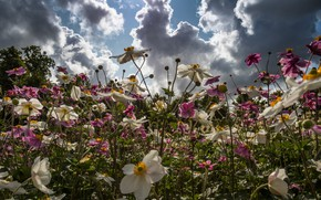Picture summer, the sky, flowers, meadow