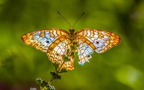 Picture macro, light, butterfly, plant, green background, yellow, bokeh