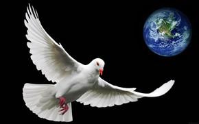 Picture earth, the world, planet, dove, symbol