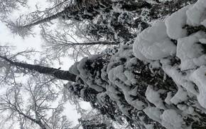 Picture winter, snow, super