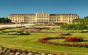 Picture flowers, Park, Austria, garden, Palace, Austria, Vienna, Vienna, Schönbrunn Palace, Schonbrunn Palace