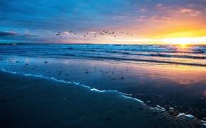 Picture sand, sea, wave, beach, the sky, the sun, clouds, rays, light, reflection, flight, sunset, birds, …
