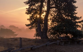 Picture rays, sunset, tree, the fence, the fence, benches, pine
