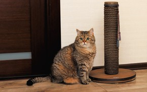 Picture cat, cat, look, face, pose, grey, background, room, wall, toy, the door, sitting, striped, Tomcat, …