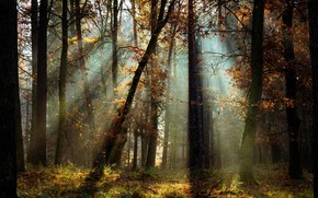 Picture autumn, forest, light, trees, landscape, nature, Radoslaw Dranikowski
