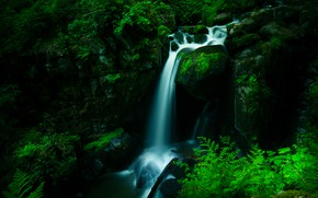 Picture forest, the dark background, waterfall